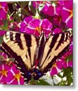 Swallowtail Butterfly Pink Metal Print