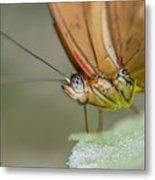 Butterfly Portrait Metal Print