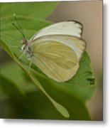 Butterfly Profile Metal Print