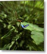 Butterfly Race Metal Print