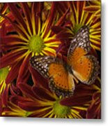 Butterfly Resting On Chrysanthemums Metal Print