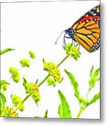 Butterfly Series #10 Metal Print