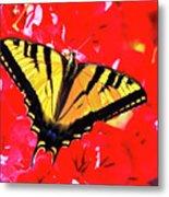 Butterfly Series #11 Metal Print