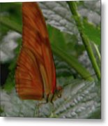 Butterfly Smile Metal Print