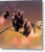Butterfly Spirit #03 Metal Print by Loriental Photography