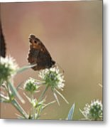 Butterfly Spring Nature Morning Scene Metal Print