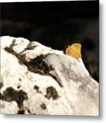 Butterfly Standing On Rock Metal Print