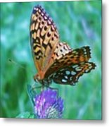 Butterfly Stare Metal Print