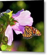 Butterfly Sunset Metal Print by Betty LaRue