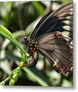 Butterfly Surprises Metal Print