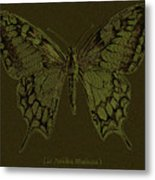Butterfly Swallow Tail Metal Print
