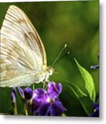 Butterfly Tea Time Metal Print