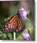 Butterfly - The Monarch  Metal Print