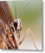 Butterfly Tongue Metal Print