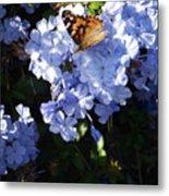 Butterfly V Metal Print