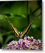 Butterfly Victory Metal Print