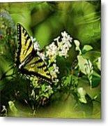 Butterfly Wall Decor Metal Print