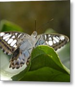 Butterfly Watching Metal Print