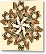 Butterfly Wheel Dance Metal Print
