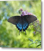 Butterfly Wish 1 Metal Print