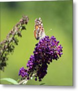 Butterfly With Flowers Metal Print