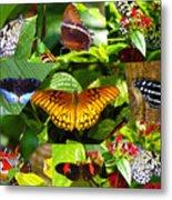 Butterfly Work 10 Metal Print