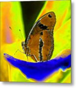 Butterfly Works Number 10 Metal Print