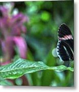 Butterfly3 Metal Print