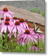 Butterfly's Lunch Metal Print