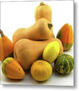 Butternut Squash With Gourds  Metal Print