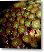 Button Polyps Metal Print