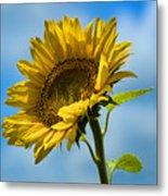 Buttonwood Sunflower 2 Metal Print