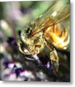 Buzz Off Metal Print