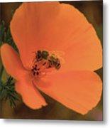 Buzzing Bee 1 Metal Print
