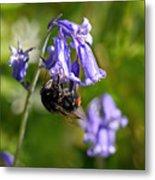 Buzzy Bee On Bluebells Metal Print