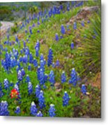 Hill Country Yucca Metal Print