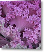 Cabbage Metal Print