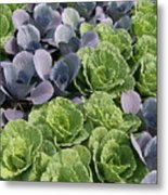 Cabbage Patch Metal Print