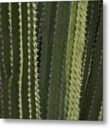 Cactus Abstract Metal Print