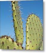Cactus Against Blue Sky Metal Print