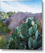 Cactus And Granite    9234 Metal Print by Fritz Ozuna