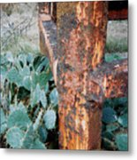 Cactus And Rust Metal Print