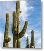 Cactus Arms Metal Print