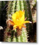 Cactus Bloom 033114a Metal Print