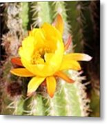 Cactus Bloom 033114e Metal Print