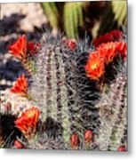 Cactus Bloom 033114f Metal Print
