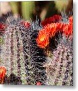 Cactus Bloom 033114g Metal Print