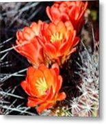 Cactus Bloom 033114j Metal Print