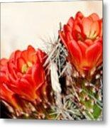 Cactus Bloom 033114m Metal Print