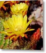 Cactus Bloom In Yellow 050715ab Metal Print